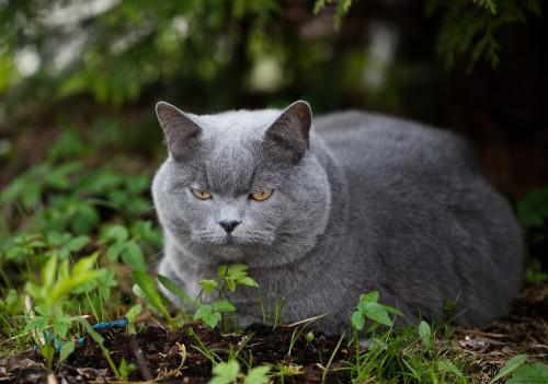 my-cat-_26316519234_o.jpg