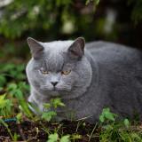 my-cat-_26316519234_o